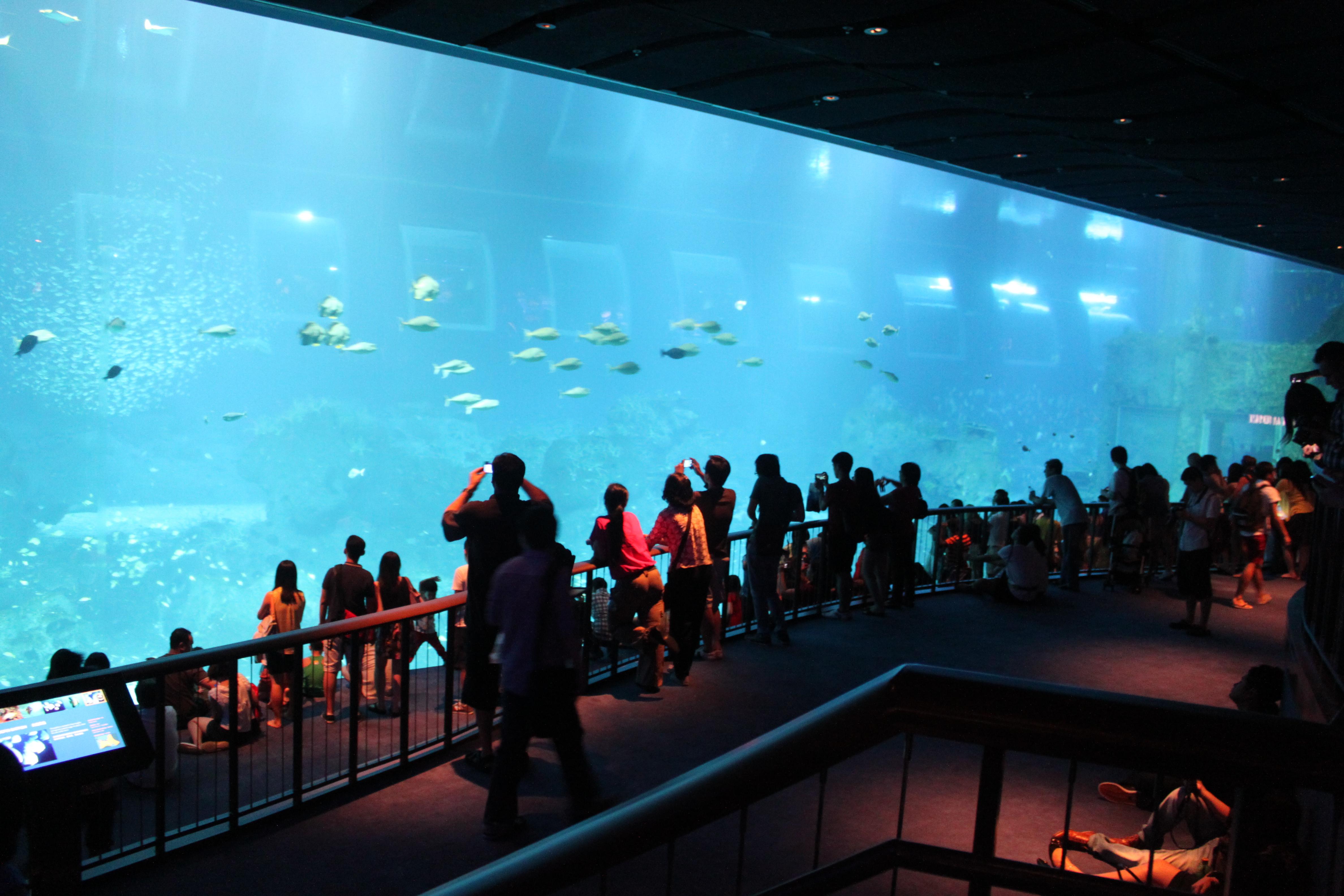 S E A Aquarium Resorts World Sentosa Follow My Wanders